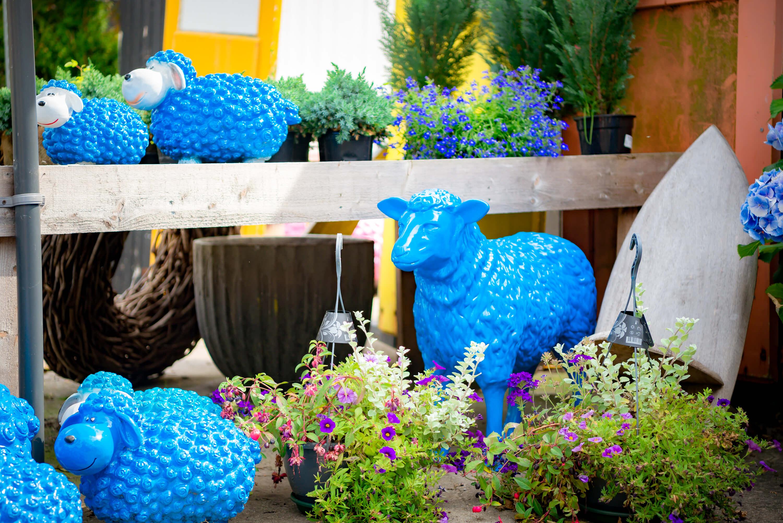 Blauwe schapen