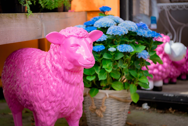Roze schaap